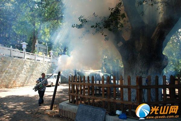 技术人员正给银杏树实施喷药救治保护