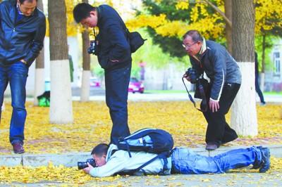 摄影爱好者趴在地上拍银杏叶