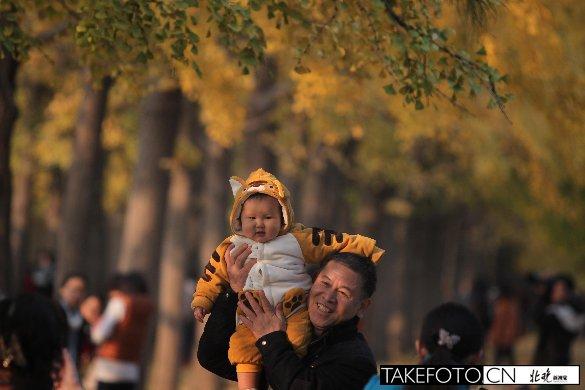 游客在银杏树下拍照