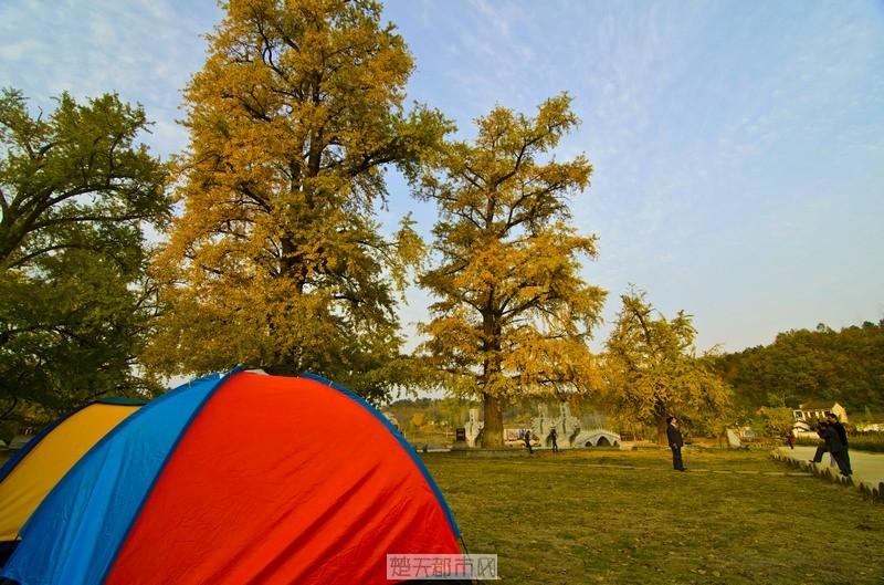 游人在银杏树下支帐篷休息