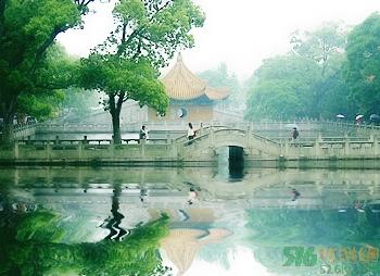 浙江普陀山普济寺的百年银杏树